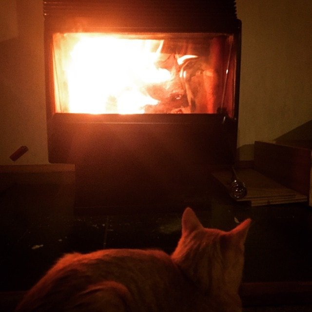 Building a #fire with the #kitten. Not literally of course.